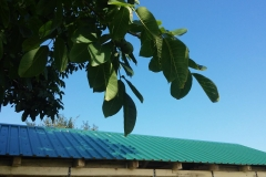Limeni krov - Trapez - Niski